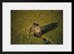 PHOTOBAY - ballade dans les marais - Photographie