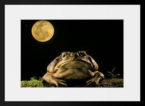 PHOTOBAY - coup de lune - Photographie