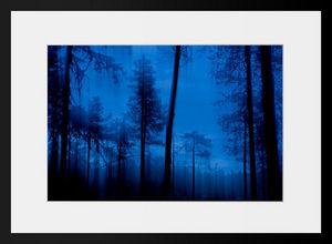 PHOTOBAY - forêt bleue - Photographie
