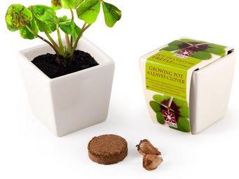 Radis Et Capucine - le trèfle porte-bonheur à cultiver dans son pot cé - Potager D'intérieur