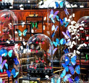 Objet de Curiosite -  - Papillon