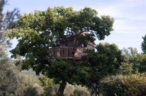 La Cabane Perchee - cabane et le petit chêne - Cabane Dans Les Arbres