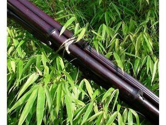 Deco Factory - botte de 3 cannes de bambou bordeaux - Arbre Artificiel