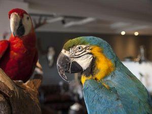 DE MUSEUM WINKEL.COM -  - Animal Naturalis�