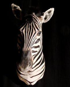 Galerie Luc Berthier -  - Animal Naturalis�