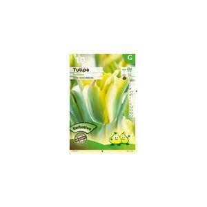 CK ESPACES VERTS - bulbe tulipe formosa x 10 - Bulbes De Fleurs