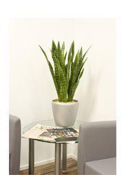 Aztec Plant Displays -  - Cache Pot