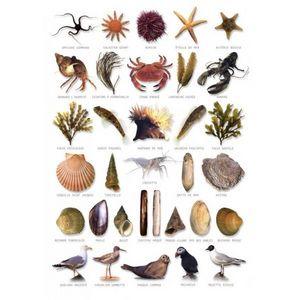 OCEANS ET JARDINS  O&J - carte postale bord de mer - Poster