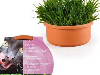 Radis Et Capucine - de l'herbe � chat pour son matou � semer dans sa  - Potager D'int�rieur