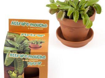 Radis Et Capucine - l'intrigante plante carnivore à semer dans sa cha - Potager D'intérieur