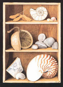 Porter Design - shells on shelves - Lithographie