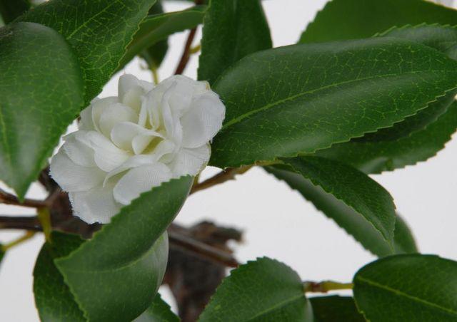Amadeus - Fleur artificielle-Amadeus-Bonsaï camélia 35cm