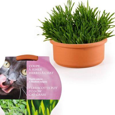 Radis Et Capucine - Potager d'intérieur-Radis Et Capucine-De l'herbe à chat pour son matou à semer dans sa