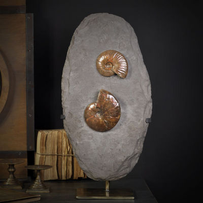 Objet de Curiosite - Fossile-Objet de Curiosite-Ammonites reflex rouge de Madagscar sur gangue
