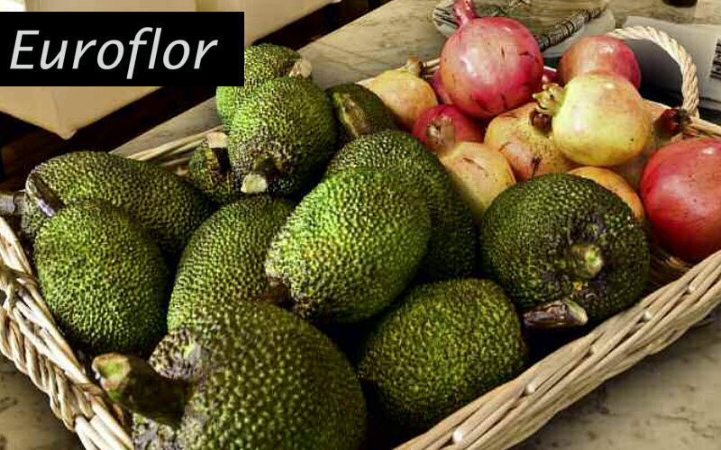 Euroflor Artificial fruit Artificial fruit Decorative Items  |