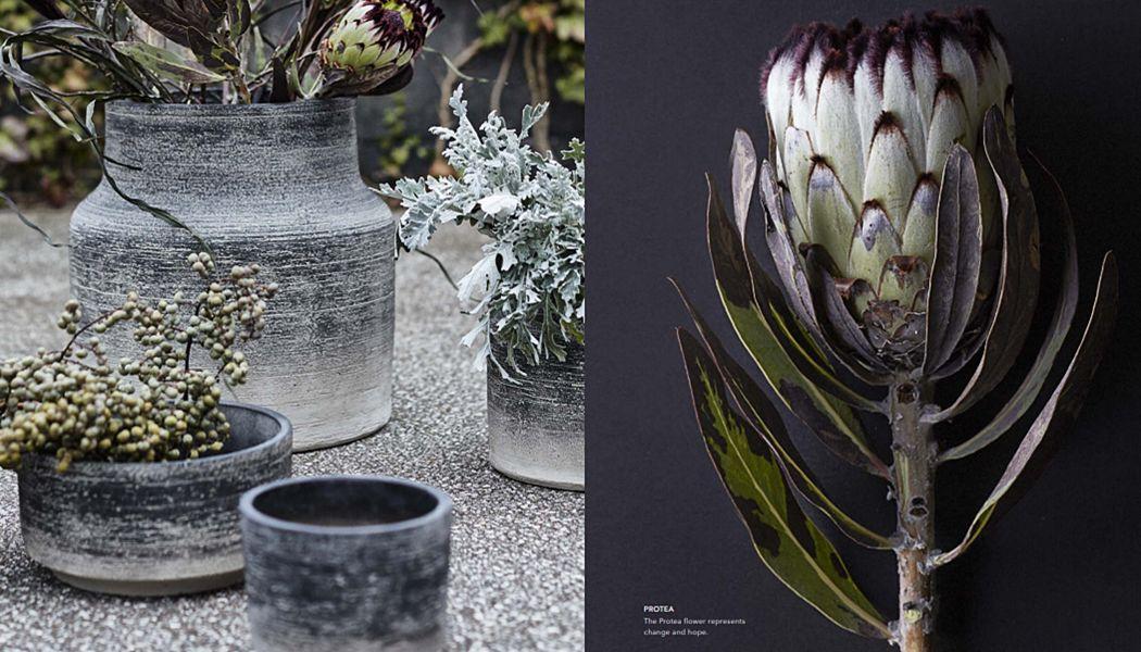 MUUBS Jar Flowerpots Garden Pots   