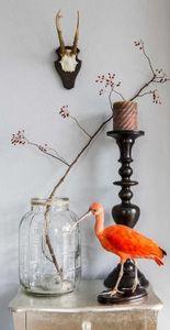 Design Et Nature Taxidermy