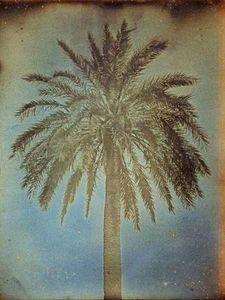 LINEATURE - palmier, athènes - 1842 - Photography