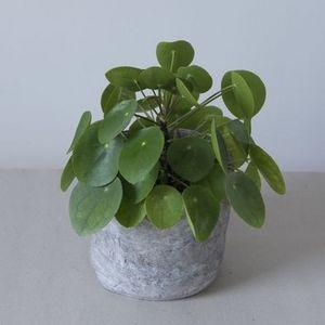 MADELEINE & GUSTAVE - beton xs - Garden Pot