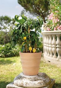 DEROMA France -  - Flower Container