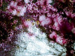 LIONEL ROY - -overlap- - Photography