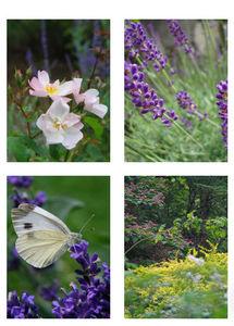 DRAW ME A GARDEN - jardin méditerranéen - Landscaped Garden