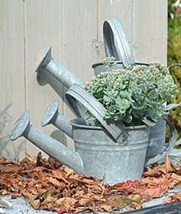 Grand Illusions -  - Watering Can