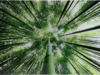Amadeus - tableau verre bambous - Dekobilder