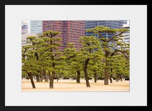 PHOTOBAY - forêt d'ailleurs - Fotografie