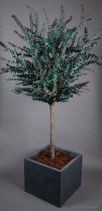 BEEFREEN JARDIN -  - Stabilisierter Baum