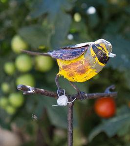 ARROSOIR ET PERSIL - bruant zizi - Pflanzenstütze