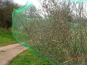 La boutique du jardinage - filet de protection anti-oiseaux 5 m x 2 m - Vogelschutznetz