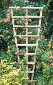 Honeysuckle Garden Products - pressure treated softwood trellis - Spalier