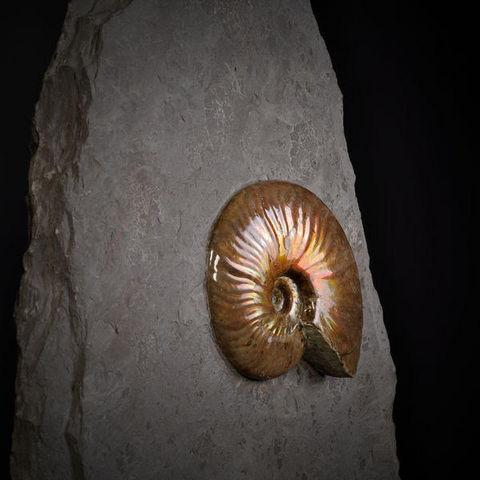 Objet de Curiosite - Fossilie-Objet de Curiosite-Ammonites reflex rouge de Madagscar sur gangue
