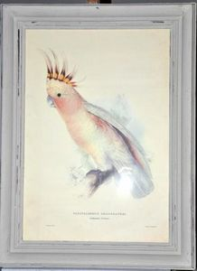 Demeure et Jardin - gravure perroquet - Grabado
