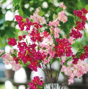 Silk-Ka -  - Flor Artificial
